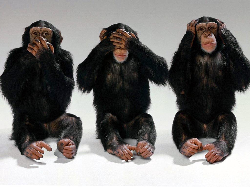maimuțele